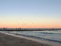 Seagulls in evening Stock Photos