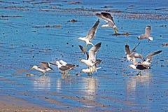 Seagulls feeding on bread scraps royalty free stock photography