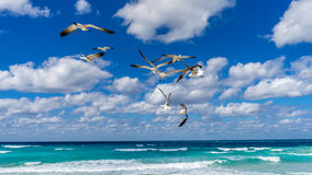 Seagulls fighting in the air Royalty Free Stock Images