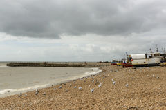 Seagulls and fish boats on beach, Hastings Royalty Free Stock Images
