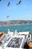 Seagulls and fishes. Some seagulls flying above fishes at fish market Royalty Free Stock Photo