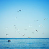 Seagulls and fishing boat Royalty Free Stock Photo