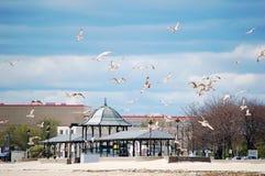 Seagulls in flight above Revere Beach, MA. Seagulls in flight above Revere Beach, Massachusetts royalty free stock photos