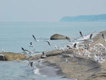 A seagulls flock flying on the beach Royalty Free Stock Photography