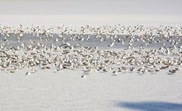 Seagulls - RAW format Stock Photos