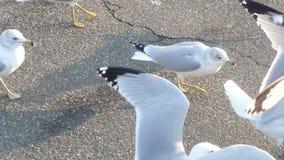 Seagulls Stock Photos