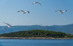 Seagulls flock on Island Hvar, Adriatic sea, Croatia royalty free stock images