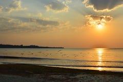 Seagulls flock over calm sea at sunrise Royalty Free Stock Image