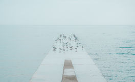 Seagulls flocking on concrete dock at sea Royalty Free Stock Photo