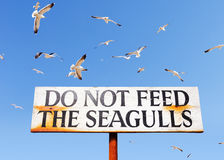 Seagulls Fly Above Do Not Feed Seagulls Sign Royalty Free Stock Photography