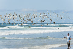 Seagulls fly above a man surf fishing in Pacific City. Pacific City,Oregon,USA - April 8, 2015:  A flock of seagulls fly`s near a fisherman as he walks the shore Royalty Free Stock Images