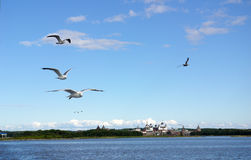 Seagulls fly above the Solovki Monastery Royalty Free Stock Photo