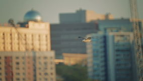 Seagulls fly against the background of ships and pier. Ships moored in the port stock video footage