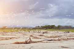 Seagulls fly on the beach. Seagulls fly on the beach Stock Image