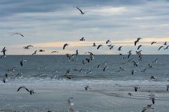 Seagulls fly with the flock on the island beach