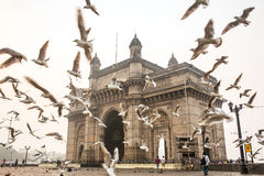 Seagulls fly in front of Gateway of India Royalty Free Stock Photos