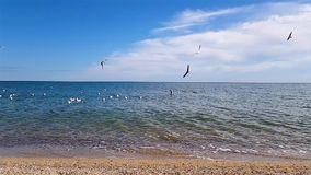 Seagulls fly over the coast.  stock footage