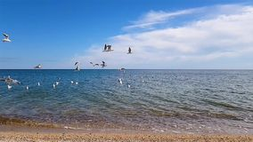 Seagulls fly over the coast.  stock video footage