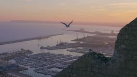 Seagulls fly over the harbor at sunset in slowmotion stock footage