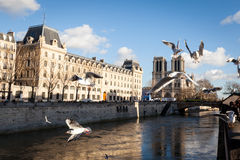 Seagulls fly over Notre dame cathedral in Paris Royalty Free Stock Photo