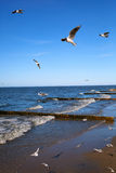 Seagulls fly over the sea on background of blue sky Royalty Free Stock Image