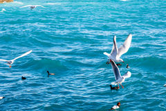 Seagulls fly over the sea on the background of the lighthouse an Stock Images