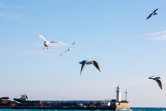 Seagulls fly over the sea on the background of the lighthouse an Royalty Free Stock Photography