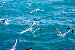 Seagulls fly over the sea on the background of the lighthouse an Stock Photos