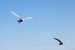 Seagulls fly over the sea on the background of the lighthouse an Royalty Free Stock Image