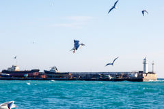 Seagulls fly over the sea on the background of the lighthouse an Royalty Free Stock Photos