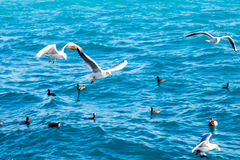 Seagulls fly over the sea on the background of the lighthouse an Royalty Free Stock Images