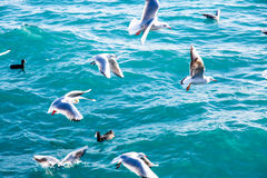 Seagulls fly over the sea on the background of the lighthouse an Stock Photography