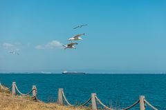 Seagulls fly over the sea Royalty Free Stock Photos