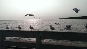 Seagulls fly over the sea and stand on the bridge Royalty Free Stock Photo