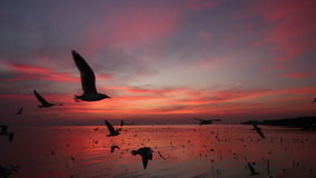 Seagulls fly over sea in twilight sky. Flock of Seagulls fly over sea in twilight sky stock footage