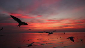 Seagulls fly over sea in twilight sky pan shot. Flock of Seagulls fly over sea in twilight sky pan shot stock video