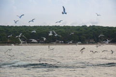Seagulls fly. Over the water Royalty Free Stock Image