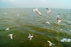 Seagulls fly on the sea Stock Photo