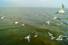 Seagulls fly on the sea Stock Photos