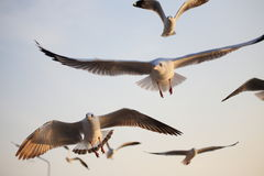 Seagulls fly in the sea Stock Photo