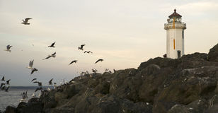 Seagulls Fly Shorebirds Rock Barrier Point Wilson Lighthouse Stock Photo