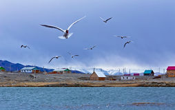 Seagulls fly and shout over the lake Stock Image