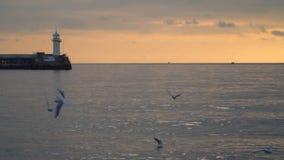 Seagulls flyger mot bakgrunden av en vågbrytare med en fyr på solnedgången arkivfilmer