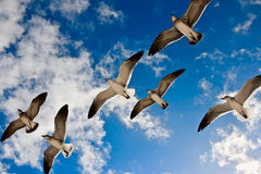 Free Seagulls Flying Stock Image - 14011451