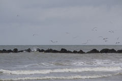 Seagulls flying Royalty Free Stock Photos