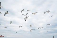 Free Seagulls Flying Stock Photo - 80164560