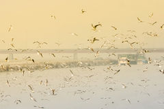 Free Seagulls Flying Above Water Royalty Free Stock Image - 50005306