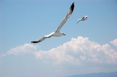 Seagulls flying away. Two seagulls flying away in blue sky with clouds stock image