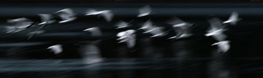 Flying Seagull Abstract Royalty Free Stock Image