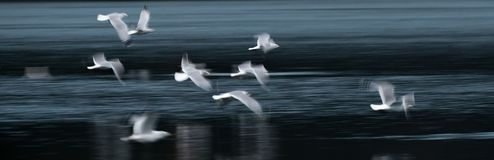 Flying Seagull Abstract Stock Photography